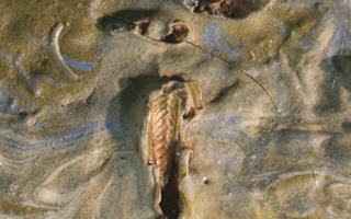 美国一美术馆在梵高杰作中发现蚱蜢