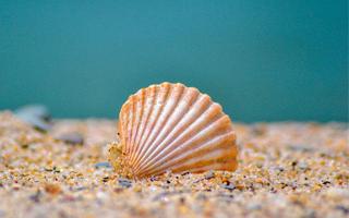 亲子坐标   探秘神秘的海洋~走进贝类世界,挖蚌取珍珠,DIY珍珠项链!