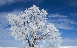 去加拿大体验冬天的美好
