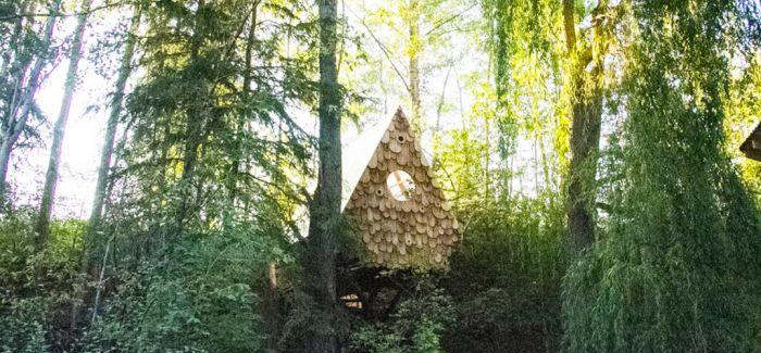 林中小鸟屋