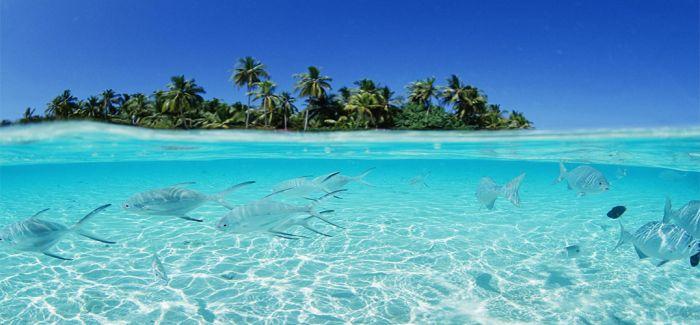 最好潜水的避寒圣地:马尔代夫
