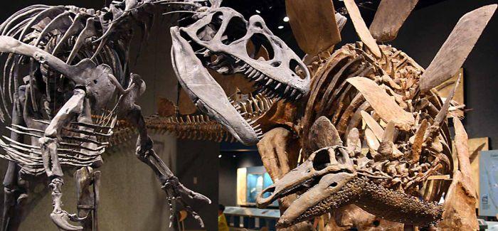 美国丹佛自然科学博物馆获得最大规模恐龙化石捐赠