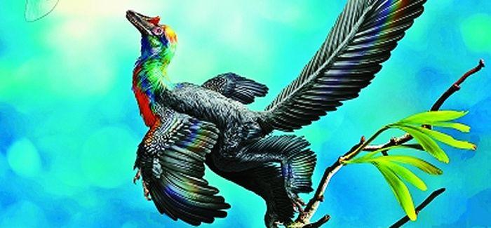 我国发现迄今最早带不对称飞羽的彩虹色恐龙
