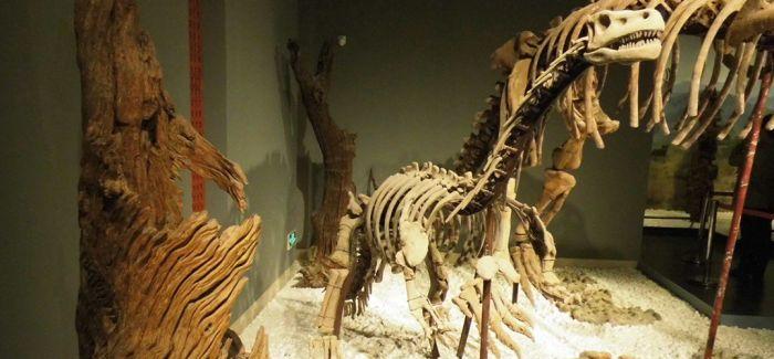 摩洛哥追查在拍会上成交的恐龙遗骨化石来源