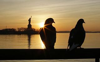 纽约州因预算僵局重新开放自由女神像