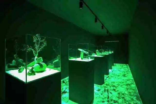 《One Beach Night》  混合媒介装置(岩石、海草、贝壳、珊瑚、感光涂料、UV光手电) 尺寸可变   艺次元 / 上海 2017