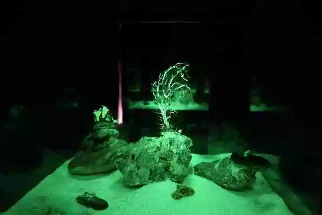 《One Beach Night》3  混合媒介装置(岩石、海草、贝壳、珊瑚、感光涂料、UV光手电) 尺寸可变   艺次元 / 上海 2017