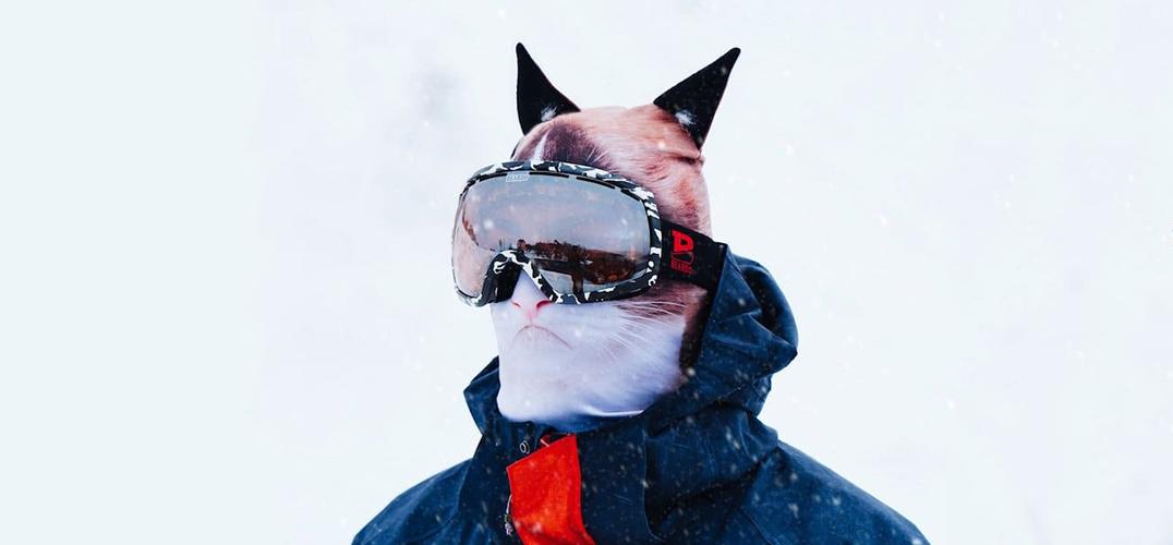 """冰雪世界上的""""疯狂动物城"""""""