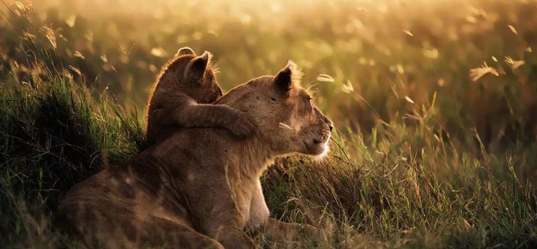 在赞比亚 与动物来一场亲密接触