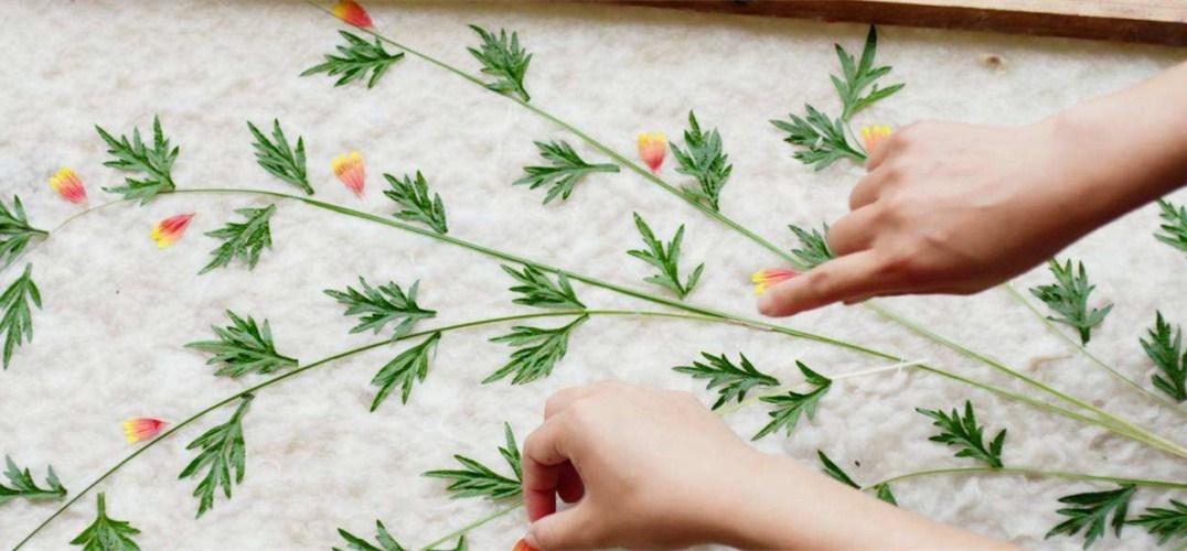 56民族文化|手工制作花草纸