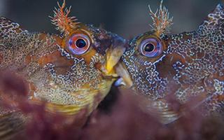 将色彩斑斓的水下世界尽收眼底