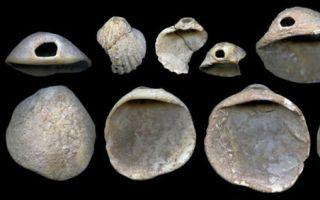 尼安德特人是石器时代的塞尚