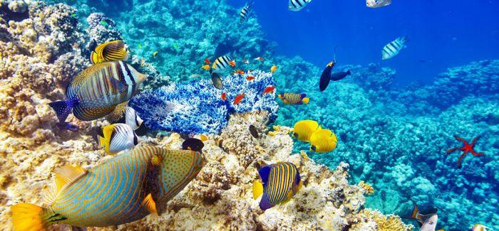 艺术家的珊瑚海