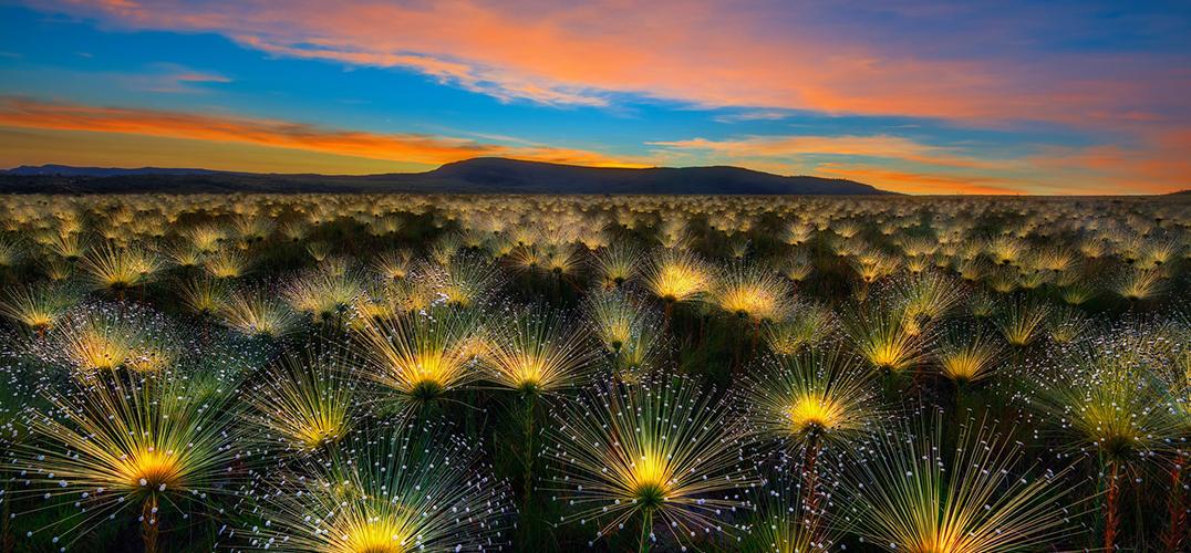 植物的世界