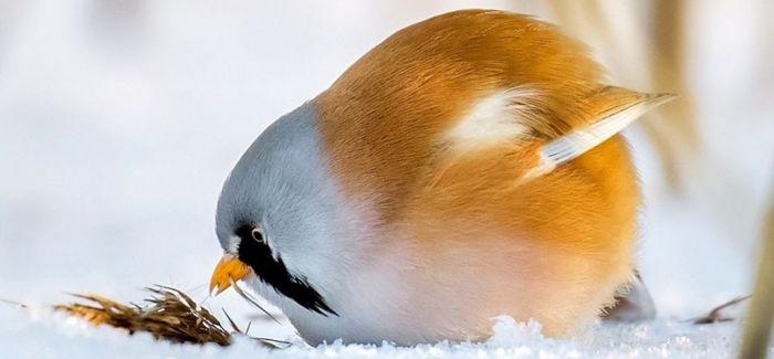 鸟儿的世界