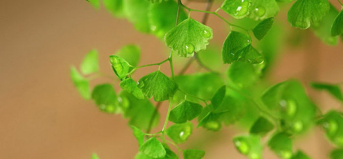 植树节 看一些关于植物的纪录片