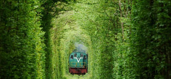 梦幻的植物隧道