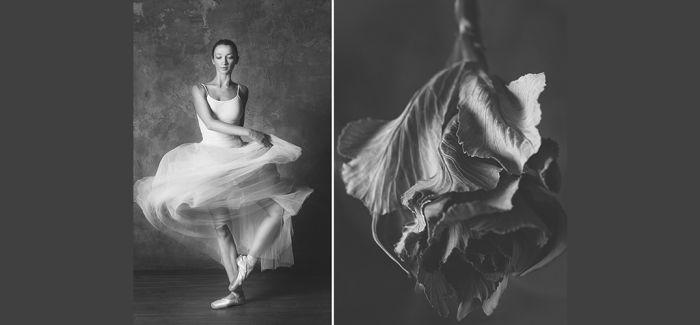 花与芭蕾 无尽的绽放
