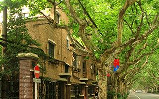 在上海感受春天