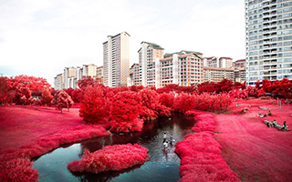 一座绯红的花园城市