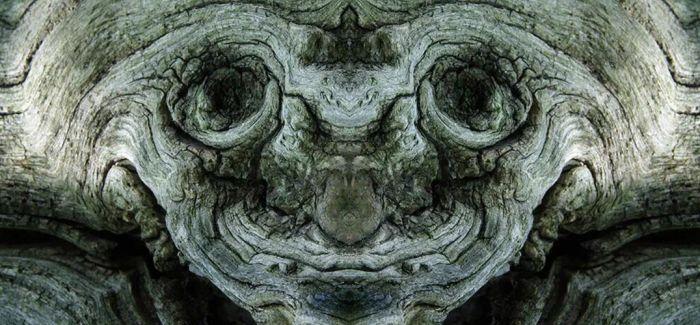 """森林中的""""梦幻生物"""""""