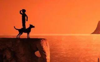 《犬之岛》:一场徒留精致的由盛转衰