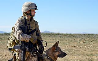 《战犬瑞克斯》:带着勋章再次起航