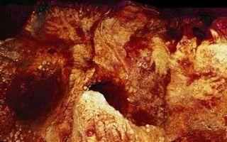 天!64000年前的第一位艺术家竟不是人类?