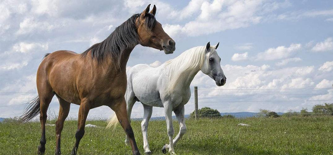 《伊库斯》:演马不见马 但还要有马