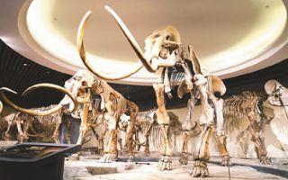 感受凝结的历史!史前动物化石的视觉盛宴
