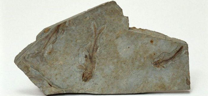 世界最古老动物足迹化石现身三峡