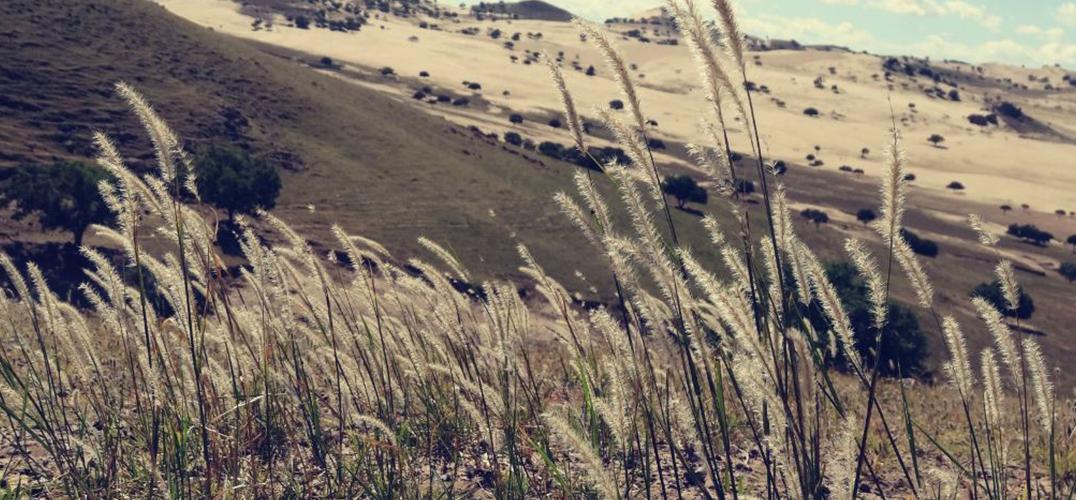 聪明的古人!3500年前辽西人已经开始种水稻