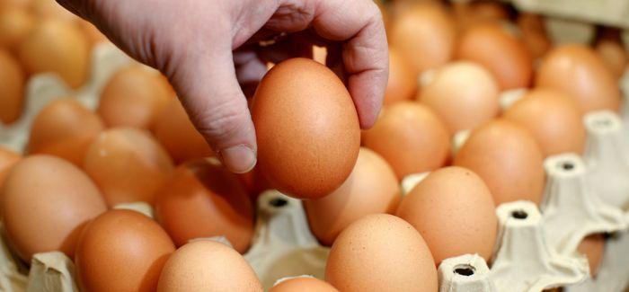 一天要吃几只鸡蛋?