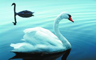 《图奥内拉的天鹅》:每束光都来自疼痛的磨砺
