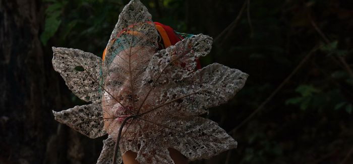 镜头与自然之间的故事
