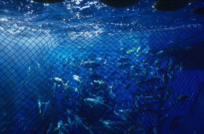 漁船捕撈時,往往使用「一網打盡」的方式,傷害海洋生態