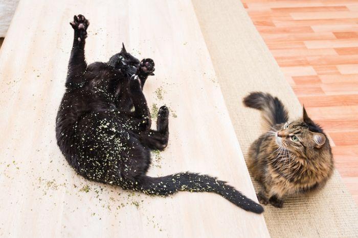 cats-on-catnip-andrew-marttila-13