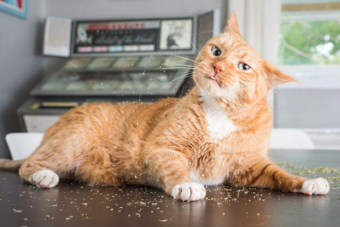 cats-on-catnip-andrew-marttila-4