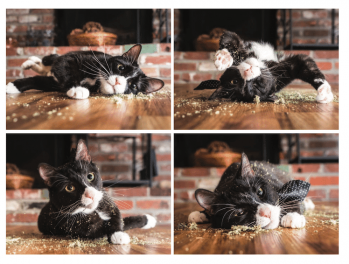 cats-on-catnip-andrew-marttila-23