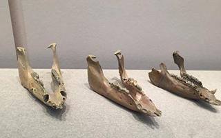 浙江良渚博物院重开馆 文物扩充近一倍