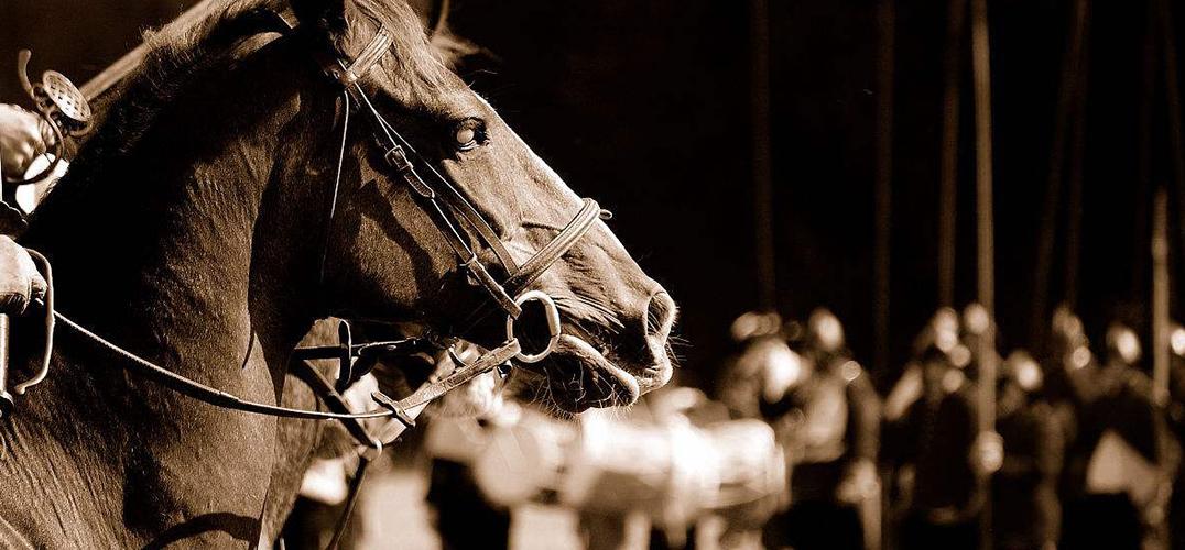 《战马》:用深邃的品格 塑造生命的高度