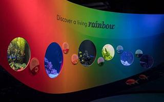 芝加哥博物馆为中国旅客推出夏季特展