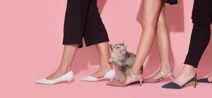 """穿上它 """"猫步""""走起来"""