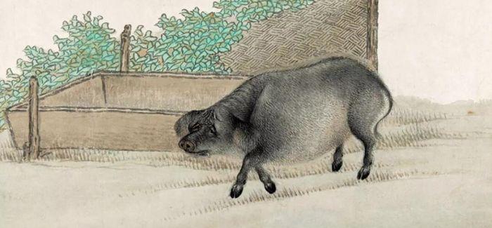 金猪喜拱门 来自紫禁城的己亥初礼