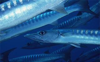 海洋生物的非凡时刻