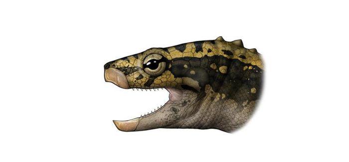 贵州关岭发现2.28亿年前龟化石