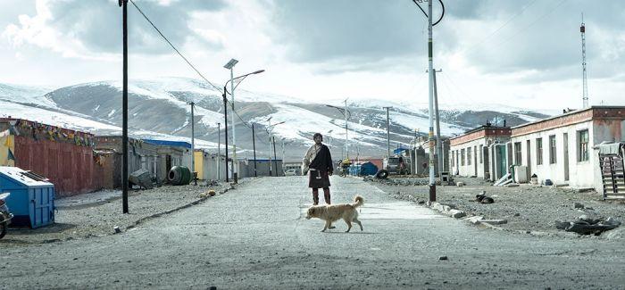 """《撞死了一只羊》入围威尼斯电影节""""地平线"""""""
