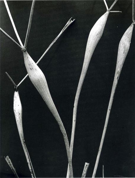 伊莫金-坎宁安——纯影派代表