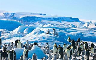 中国游客渐成南极旅游主力