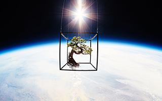 太空中的盆景